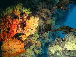 سبحانك .. ماعبدناك الا حق عبادتك(صور) reef2.jpg&h=94&a